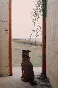 Kremacja zwierzęcia - czy to dobry pomysł?